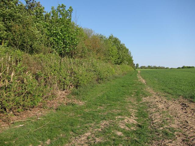 Unnamed plantation
