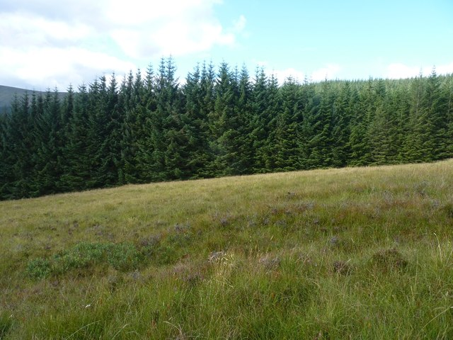 Forestry edge below Meall Dubh