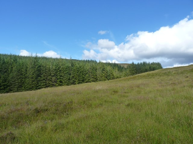 Looking uphill along forestry edge below Meall Dubh