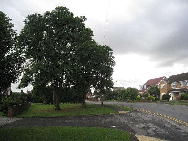 Trees on Winslow Drive, Immingham