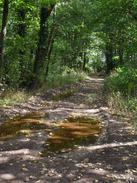 Woodland footpath near Silkstone