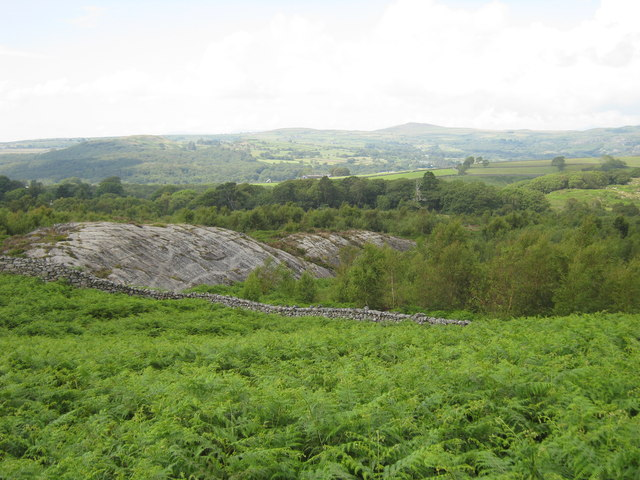 Hillside greenery