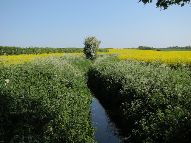 Ditch from Roman Road