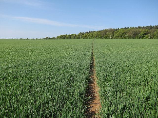 Bridleway to Borley Wood
