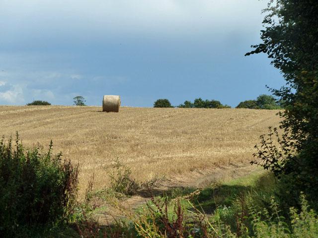 Straw bale in a stubble field