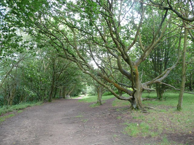 Path junction in the Chevin Forest Park, Otley