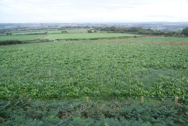 A crop below Crugiau Cemmaes