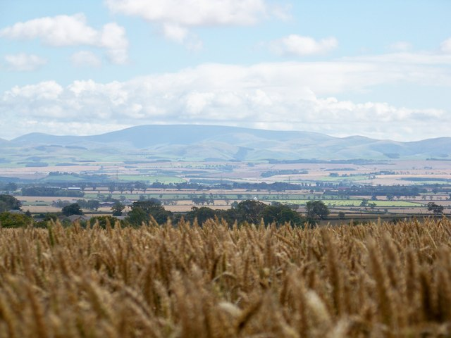 The Merse & Cheviot Hills