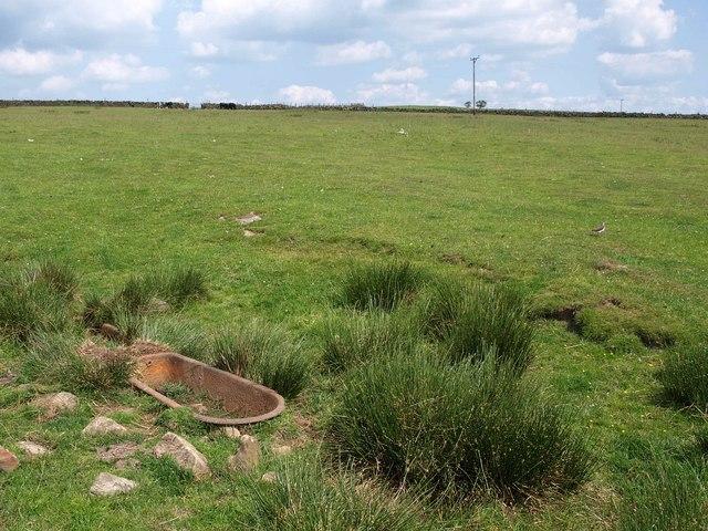 Pasture on Weston Moor