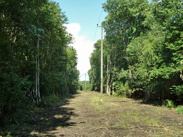 Powerline in Newyears Wood