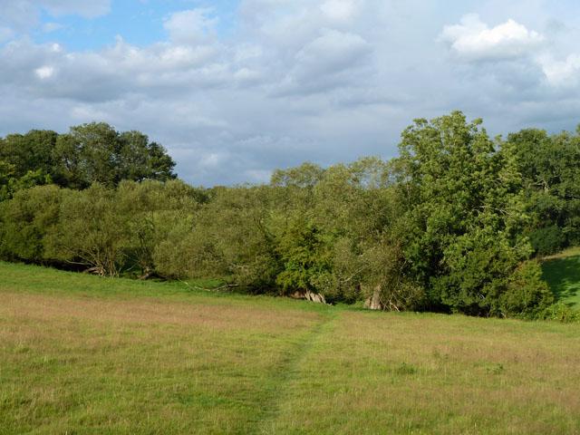 Willows near Obriss Farm
