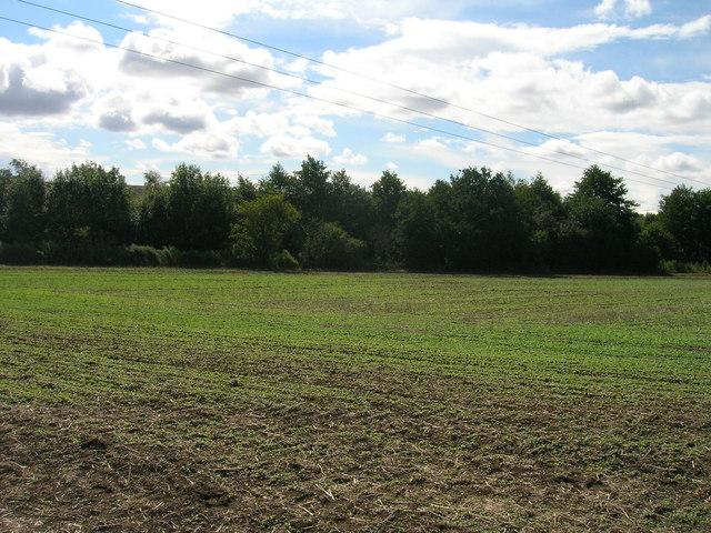 Farmland off Newhall Lane