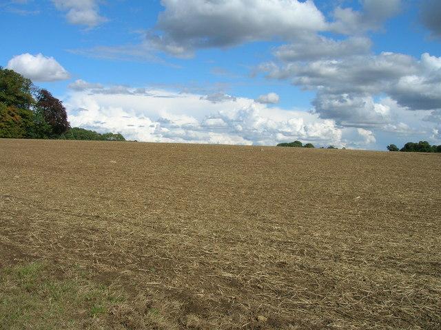 Farmland near T Plantation