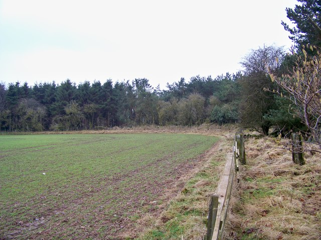 Field Edge At 'Chapel Wood'