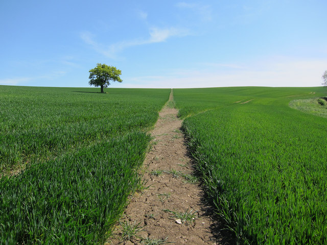 Footpath from Hadstock