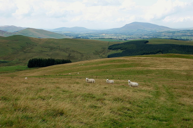 Sheep grazing, Stirkfield Hope