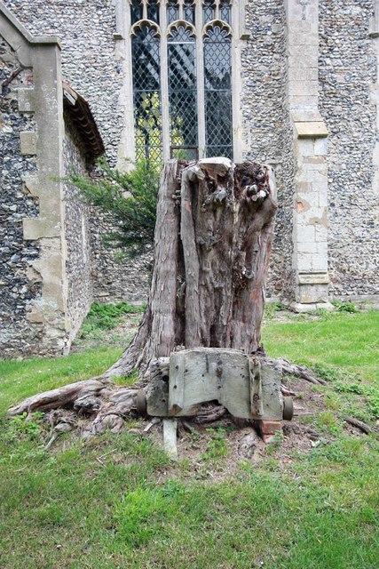 St Mary, Carleton Forehoe - Tree stump