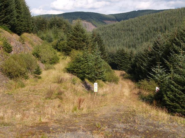 Forestry Track Junction near Midgehope