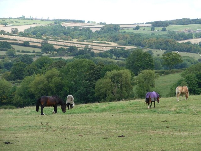 Horses grazing north of Bilham Road
