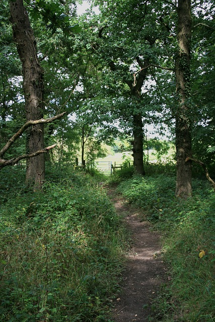 Sixty Acre Wood