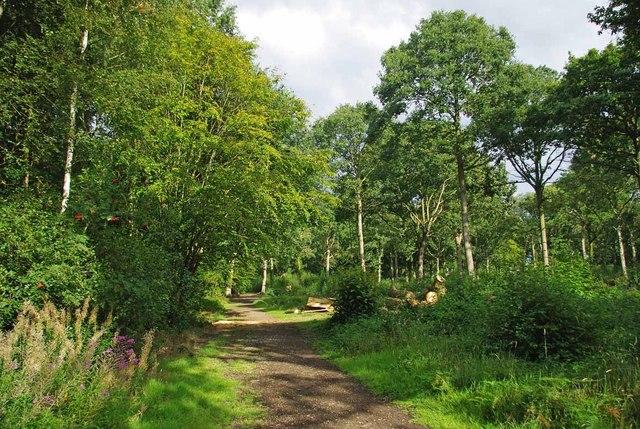 Hadleigh Great Wood