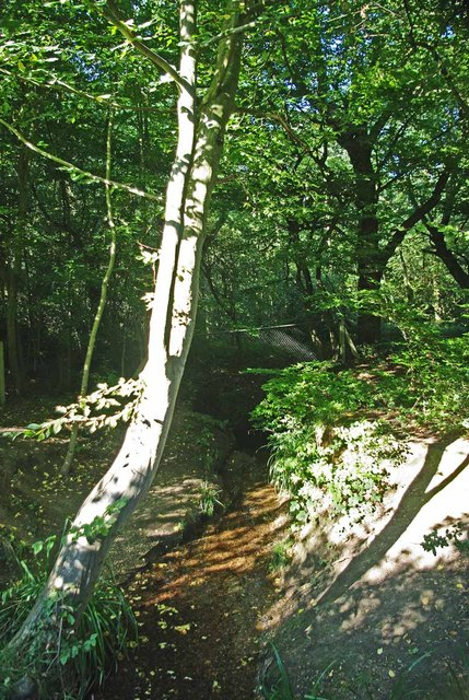 Prittle Brook in Hadleigh Great Wood