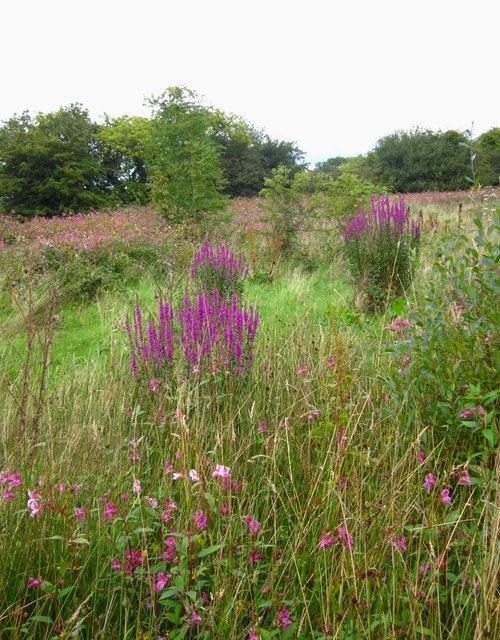 Gwledd o flodau / A feast of flora