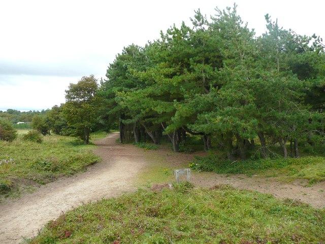 Nicotine Wood, Formby