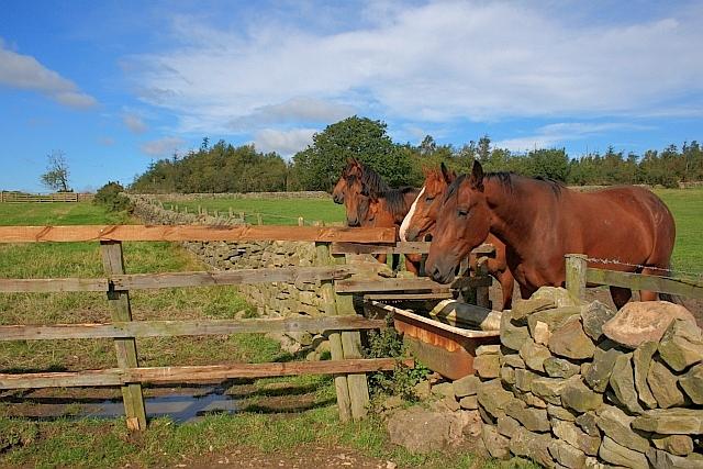 Fence/Wall Junction, near Moor Cottage Farm