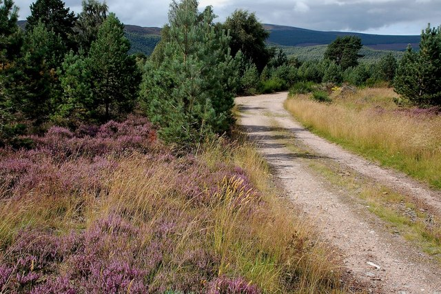 Forestry Track Near Inverdruie