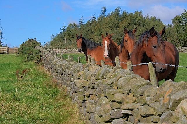 Wall, near Moor Cottage Farm