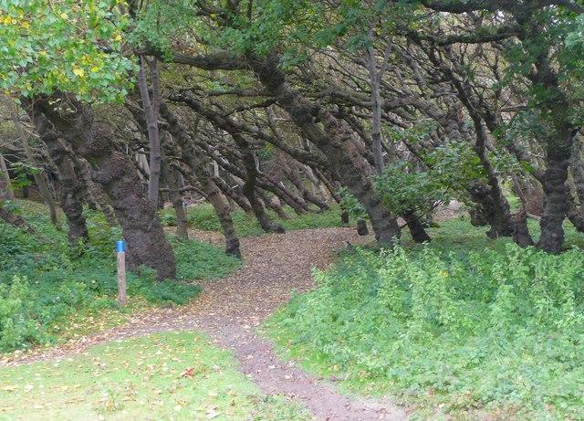 Permissive bridleway through woodland, Formby
