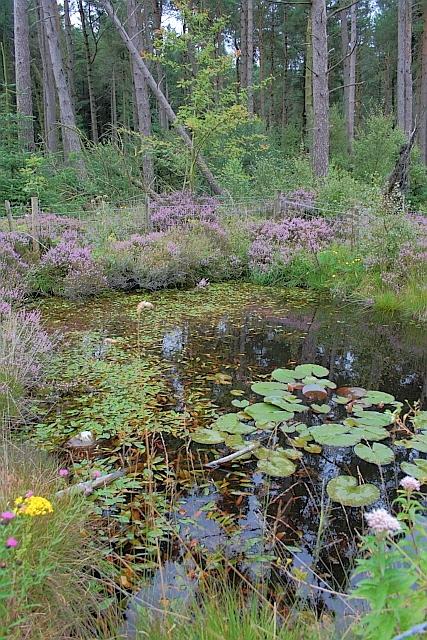 Fire Pond, Standingstones Rigg