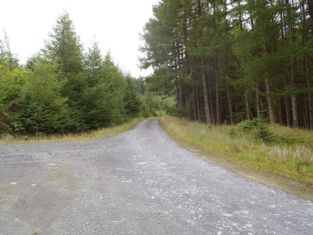 Track junction in the Glentrool Forest
