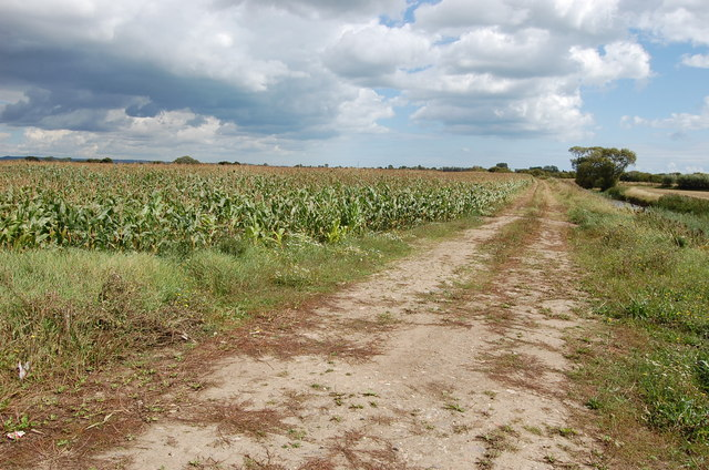 Farm track and cornfield near Winford bridge