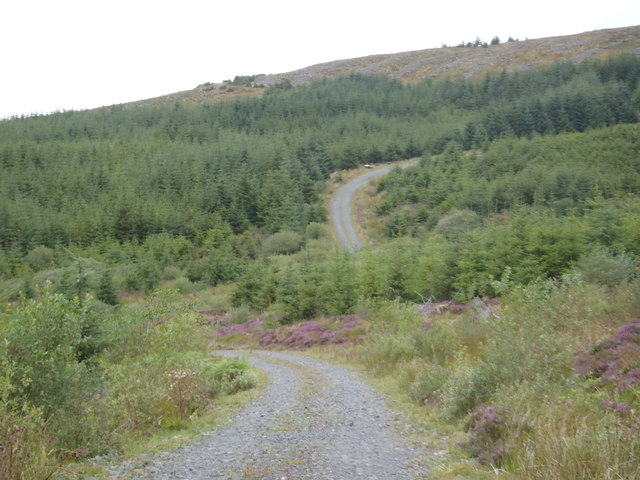 The Bennan Track, Glentrool Forest
