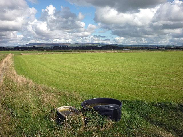 Grassland on Cockerham Moss