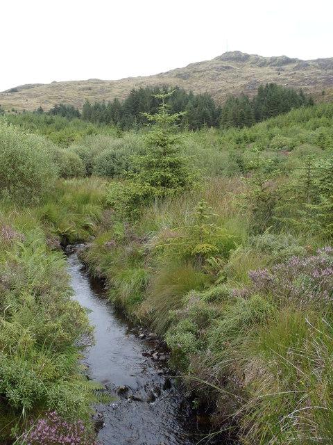 The Pulnagashel Burn, Glentrool Forest