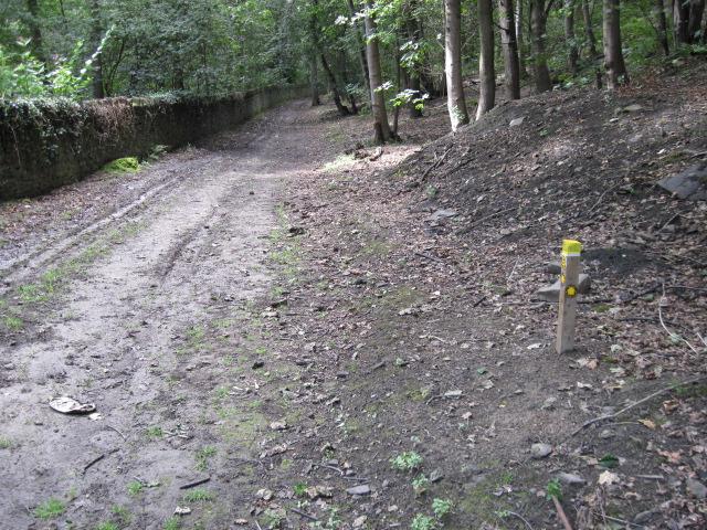 Footpath in Freeman's Wood