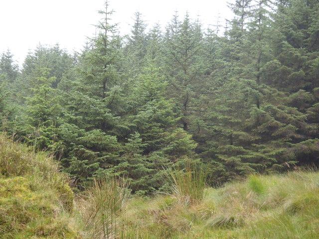 Forest near Lagwholt Moor