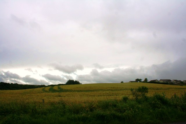 Grain Field by Potterton