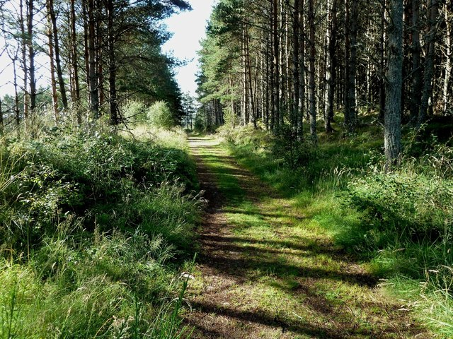 Going Into The Abernethy Forest