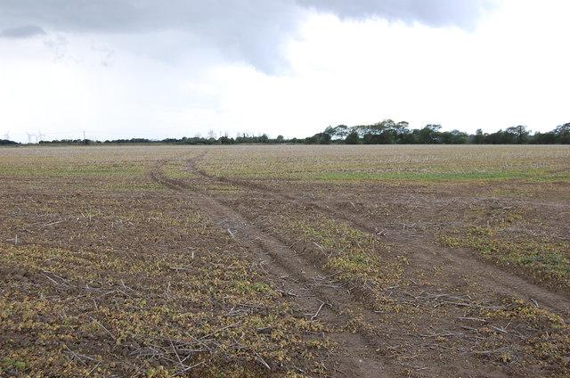 Tracks across field, near White's House