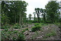 TQ1661 : Coppicing in Sixty Acre Wood by Hugh Craddock