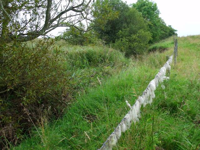 Fence Burn north-west of Morpeth