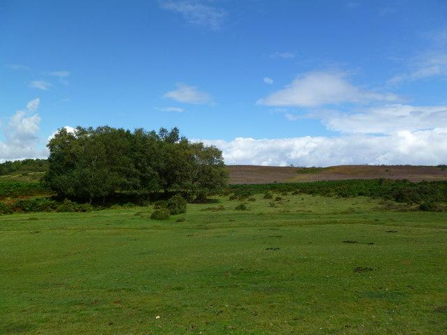 Frogham, heathland