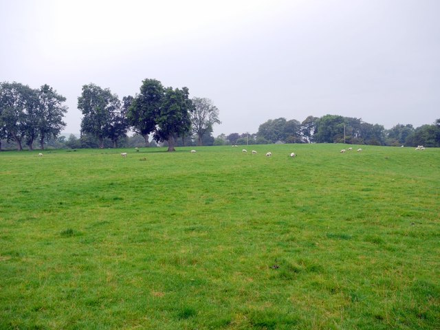 Sheep pasture north-east of Mayfield