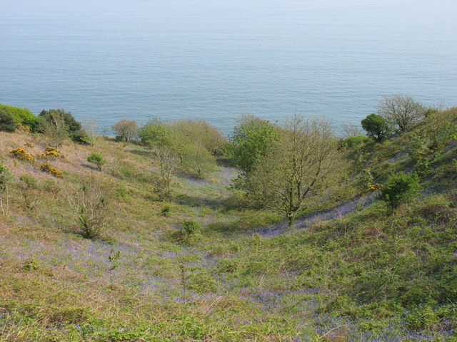 A gentle combe leading down to the sea
