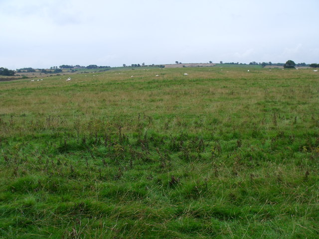 Open grassland on point 102 south of Berryhill Wood near Morpeth