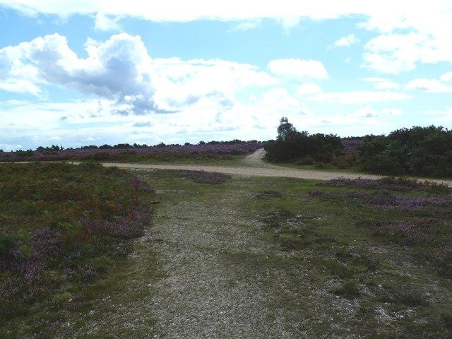 Hampton Ridge, track junction